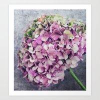 Rustic Hydrangea Art Print