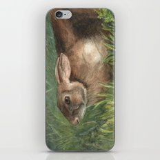 Shy Rabbit iPhone & iPod Skin