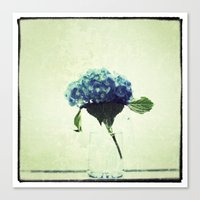 Hydrangea My Favorite Canvas Print