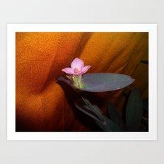 Purple Spiderwort on Orange Art Print
