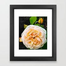 Bloom1 Framed Art Print