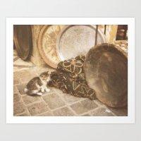 Cats Of Morocco Art Print