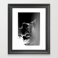 Bliss Kitten 3 Framed Art Print