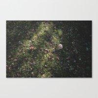 FEILD OF MUSHROOMS Canvas Print