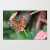 Butterfly On A Pink Flow… Canvas Print
