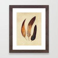 Three Feathers  Framed Art Print
