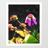 Hanging On To Beauty Art Print