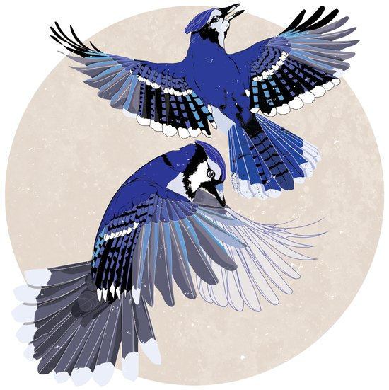Blue Jays. Art Print