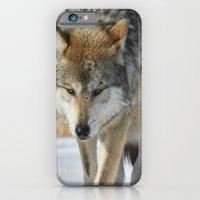 iPhone & iPod Case featuring Lone Wolf by Dan Svoboda