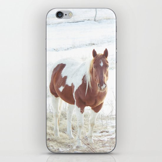 Snow + Horse iPhone & iPod Skin