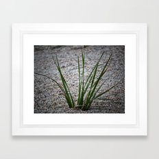 Beach Grass Framed Art Print