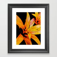 Yellow Bloom Framed Art Print
