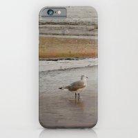 iPhone & iPod Case featuring Scavenging by PhotographyByJoylene