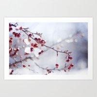 Cherries In Winter Art Print