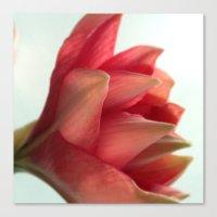 amaryllis 2 Canvas Print