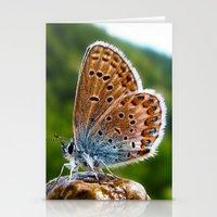 Teton Moth Stationery Cards