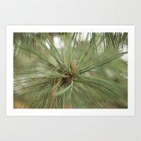 Pine Art Print