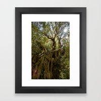 Ancient Olive Tree Framed Art Print