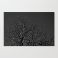 Timber Veins Canvas Print