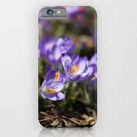 Purple Crocuses iPhone 6 Slim Case