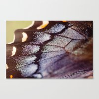 Butterfly Wing Macro Canvas Print