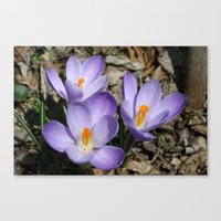 Garden Flowers Canvas Print