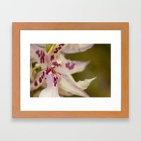 Cambria 5-8022 Framed Art Print