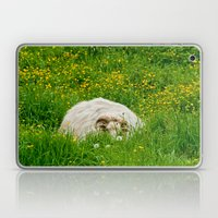 Sheep in the grass Laptop & iPad Skin