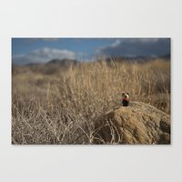Desert Dog Canvas Print