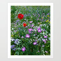 Wild Flower Meadow Art Print