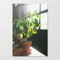 Potted Plant Canvas Print