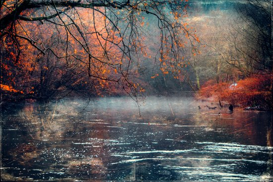 between fall & winter Canvas Print