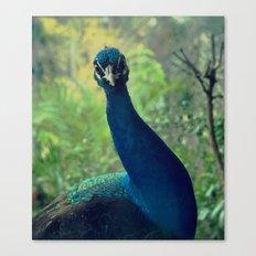 Roman Peacock Canvas Print