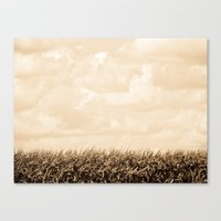 Summer Corn Stalks Canvas Print