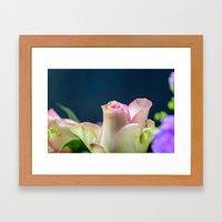 Softness of a rose Framed Art Print