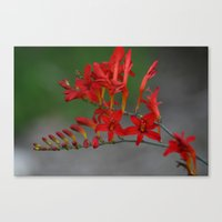 Red Flowers 3 Canvas Print
