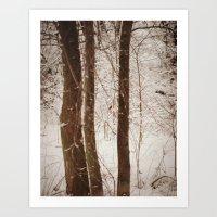 Cardinal in Winter Woods Art Print