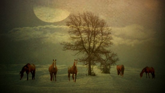 A Winters Evening Canvas Print