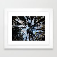 Looking up the Sky Framed Art Print