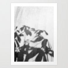 Shadows In Curtain Art Print