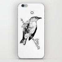 Key Bird iPhone & iPod Skin
