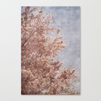Beautiful Day - (pink cherry blossoms) Canvas Print