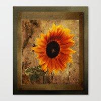 Vintage Sunflower Framed Canvas Print