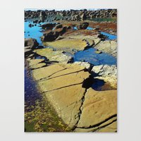 Abalone Colors Canvas Print