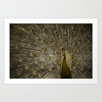 Golden Peacock Art Print
