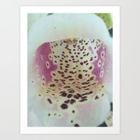 Foxglove 2 Art Print