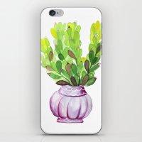 Succulent Vase iPhone & iPod Skin