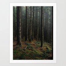 Gorge Woods Art Print