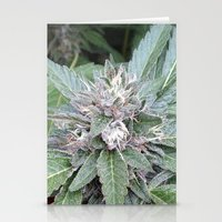 Bubba Kush Stationery Cards