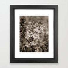 Lilacs in Sepia Framed Art Print